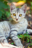 Close-up of a street cat  — Stock Photo