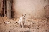 Street homeless cat — Stock Photo