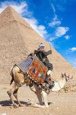 Bedouin seats camel — Stock Photo