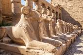 Avenue of the ram-headed Sphinxes — Stock Photo