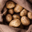 Harvest potatoes in burlap sack — Stock Photo #71720915
