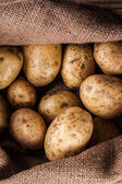 Harvest potatoes in burlap sack — Stock Photo