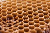 Sweet honeycombs background — Stock Photo