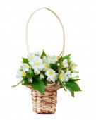 Jasmine bouqet in basket — Stock Photo
