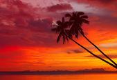 Palmeras en sunset — Foto de Stock