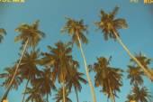 Palm trees at tropical coast — Stock Photo
