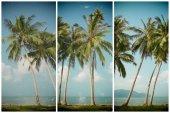 Palm tress on sea shore — Stock Photo
