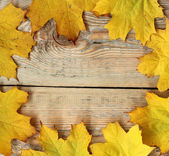 Marple leaves frame on wooden texture — Stock Photo