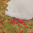 Bridal skirt filled with red rose petals. — Stock Photo #69251591