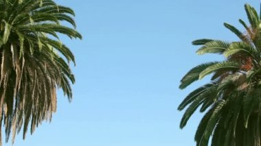 Swaying palm tree against the blue sky — Stock Video