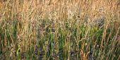 Tło żółty trawy — Zdjęcie stockowe