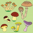 Various mushroom collection 01 — Stock Vector #70417159