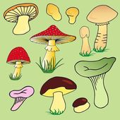 Various mushroom collection 02 — Stock Vector