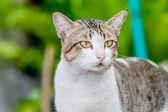 cute cat — Stock Photo