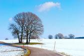 Trees in Snow Landscape — Стоковое фото