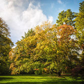 Westonbirt Arboretum — Stock Photo