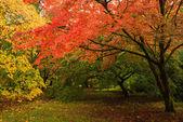 Fall Trees — Stock Photo