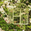 Birdcage — Stock Photo #69927415
