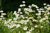 весенние цветы — Стоковое фото