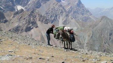 Donkeys in mountains of Tajikistan — Stock Video