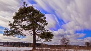Tree and clouds in sky — Stock Video