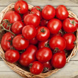 Great assortment of ripe red tomatoes — Stock Photo #55310683