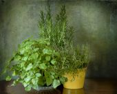 Mint, thyme and rosemary — Foto de Stock