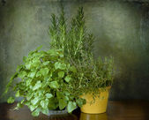 Mint, thyme and rosemary — Fotografia Stock