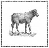 Calf chart — Stock Photo