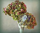 Dry Hydrangea flowers in vase — Stock Photo