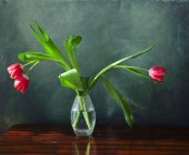 Three red tulips in a glass vase — Stock fotografie