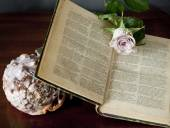 Open book with rose blossom and shell — Stock Photo