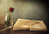 Open old book, a rose in a vase and a feather — Stock Photo
