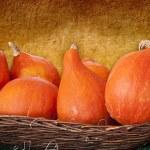 Hokkaido orange pumpkins in a basket — Stock Photo #58760591