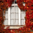 White window framed by autumnal red leaves — Stock Photo #58763051