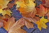 Autumnal fallen leaves — Stock Photo