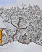 Austria, small red chapel and tree covered by snow — 图库照片