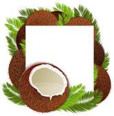 Coconuts — Stock Vector