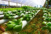 Green Planting hydroponics — Stock Photo