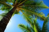 Picturesque palm trees with clear sky — Stock Photo