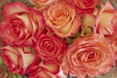 Rose flowers bouquet closeup — Stock Photo