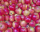Fresh red apples for sale — 图库照片