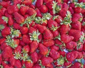 出售新鲜草莓 — 图库照片