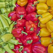 彩色甜椒中的销售 — 图库照片