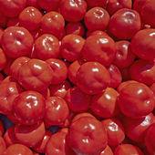 待售的红色新鲜的西红柿 — 图库照片
