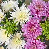 White and pink chrysanthemum flowers — Stock Photo