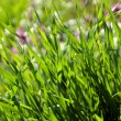 Spring background with green grass and flowers in the distance — Stock Photo #71676109