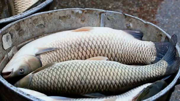 Pescado fresco listo para mercado — Vídeo de stock