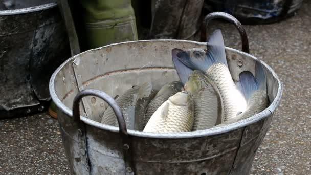 Pescado en un cubo — Vídeo de stock