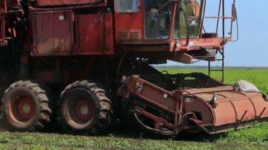 Harvester picking peas — Stock Video
